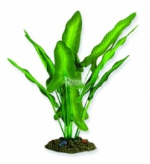 Aqua One Green / White Sword Silk Plant - (20cm / 30cm / 40cm)
